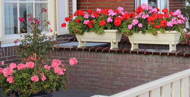 Fiori contro le zanzare arreda il giardino - Contro le zanzare in giardino ...