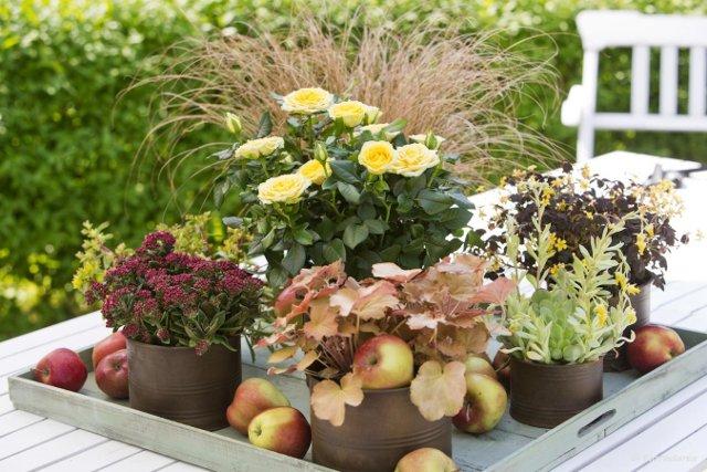 trasformare giardini e terrazze per l'autunno fiori
