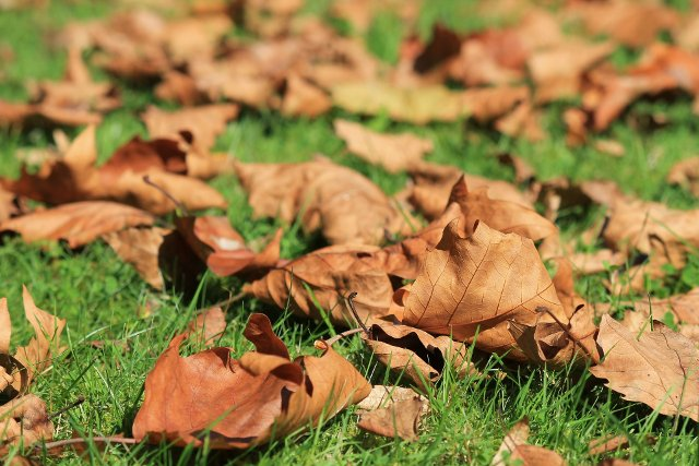 foglie autunnali erba