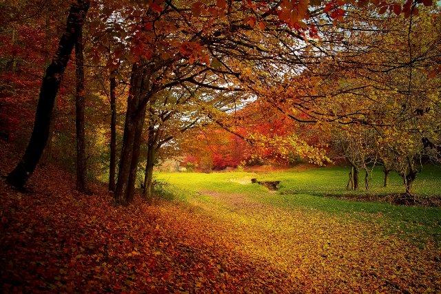 foglie autunnali pacciame radici