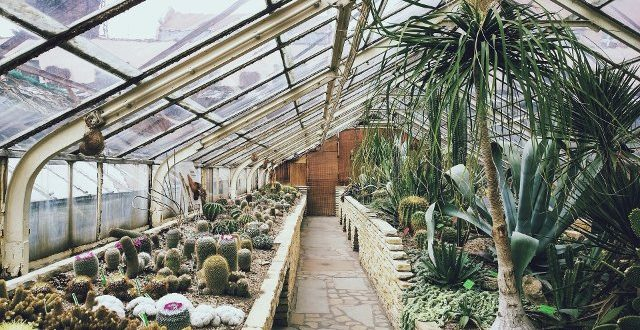 Giardino Dinverno Permessi : Come proteggere le piante per l inverno con le serre da giardino