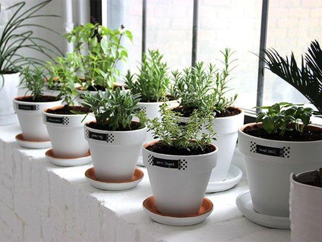 piante in vaso in serre da giardino