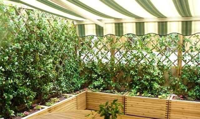 8 idee per decorare e arredare un terrazzo anche mini in for Piante da comprare