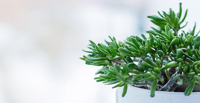 Arredogiardino piantagrassa vaso arreda il giardino for Stile minimal chic
