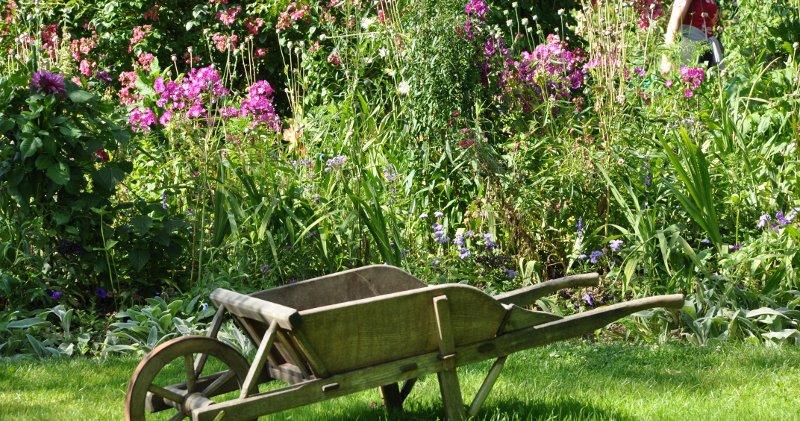 cura delle piante per sistemare il giardino