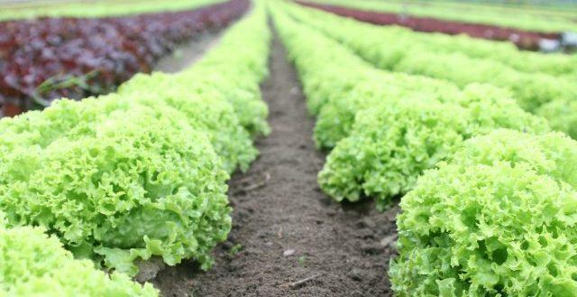 Orto a settembre cosa piantare e come proteggerlo for Cosa piantare nell orto adesso