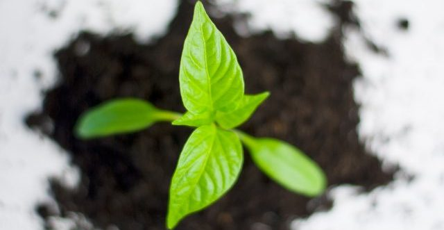 Orto a settembre: semina e trapianto