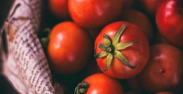Pomodori raccolti da un orto a settembre