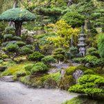 Il giardino giapponese verde e rigoglioso