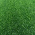 Prato a rotoli dry verde chiaro fitto
