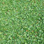 Prato a rotoli dicondra verde chiaro
