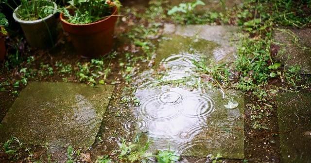 giardino sotto la pioggia