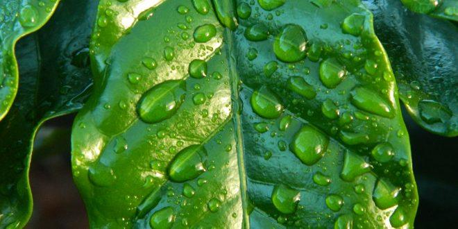 raccolta dell'acqua piovana in giardino