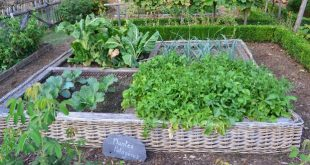 Oggetti riciclati per creare semenzai o orti rialzati