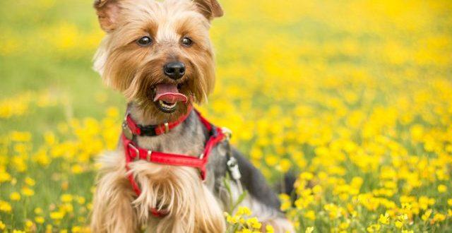 Cosa fare quando si tiene il cane in giardino