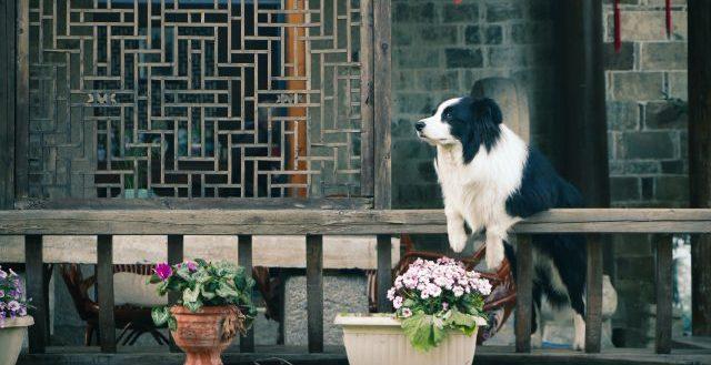 Cane in veranda che guarda il giardino