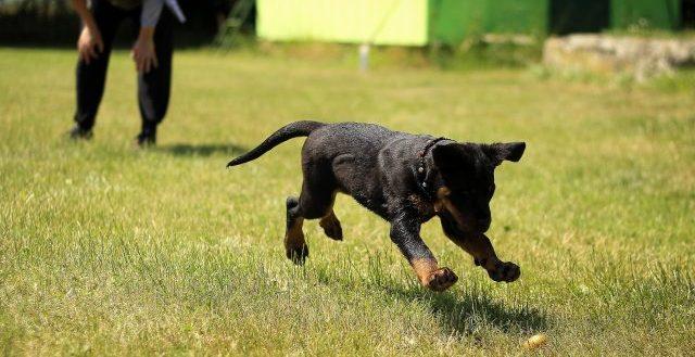 I cani in giardino vogliono correre e giocare
