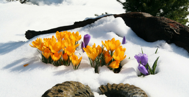 4 bellissime piante da giardino resistenti al freddo e for Piante da giardino perenni resistenti al freddo