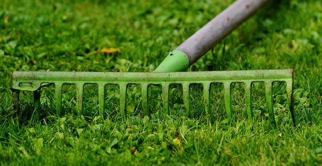 Prato Verde Arreda Il Giardino