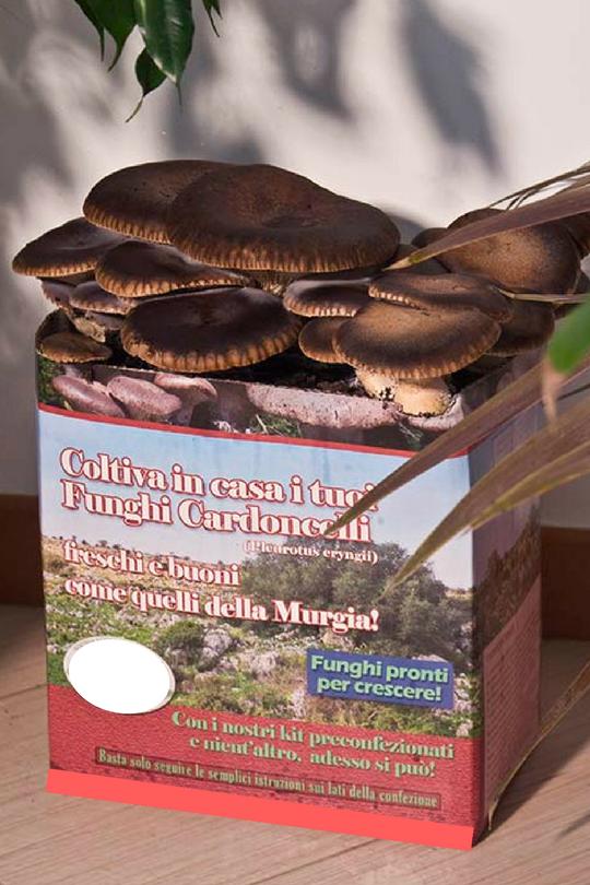 esempio kit coltivazione funghi
