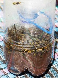 trappola fai da te per eliminar le vespe