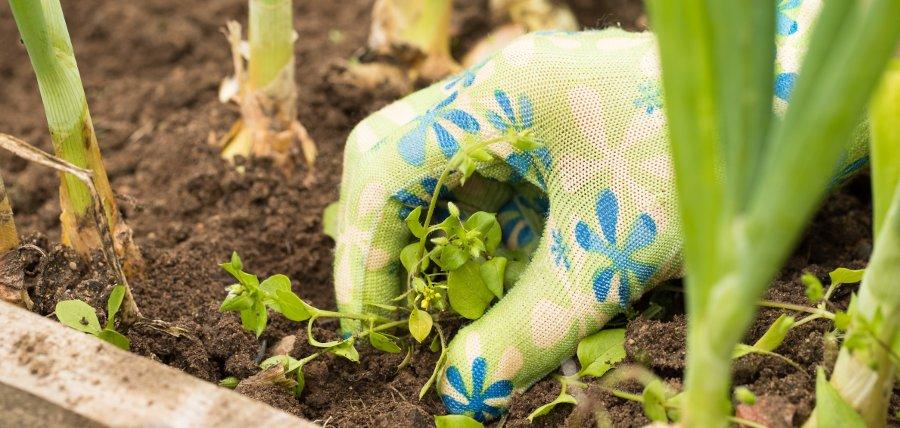 estirpare le erbacce in giardino al momento giusto