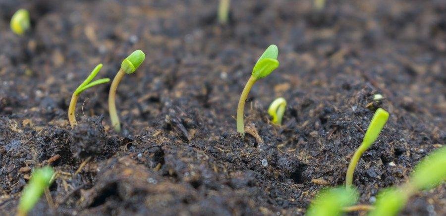 erbacce in giardino che germogliano