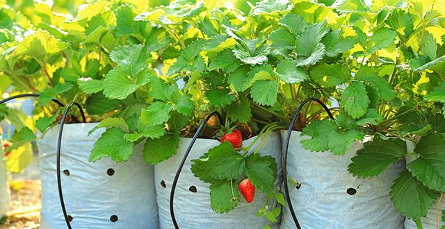 distributore-acqua-autonomo-goccia-goccia-irrigazione-durante-le-vacanze
