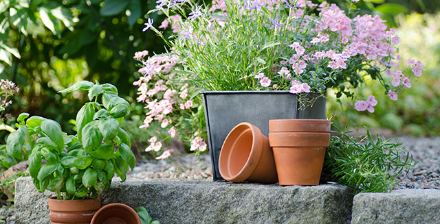cosa-fare-in-giardino-ad-agosto-rinvasa-piante-appartamento