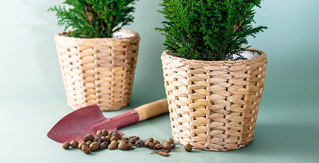 Giardino senza terra 5 vantaggi della coltivazione - Sacchi di terra per giardino ...