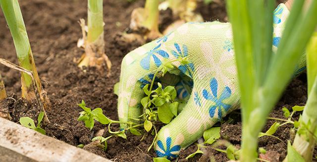 aiuole-da-giardino-togliere-le-erbacce-infestanti