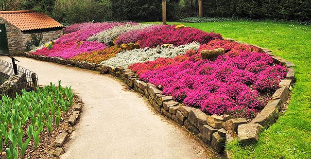 Aiuole da giardino ripetere più volte la stessa specie di fiore