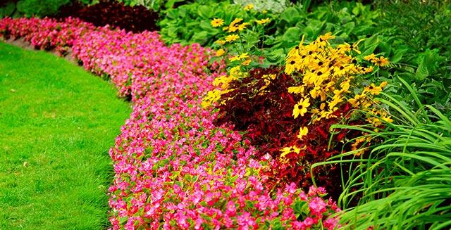 aiuole-da-giardino-disposizione-piante-a-seconda-altezza