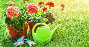 innaffiare-le-piante-in-vacanza