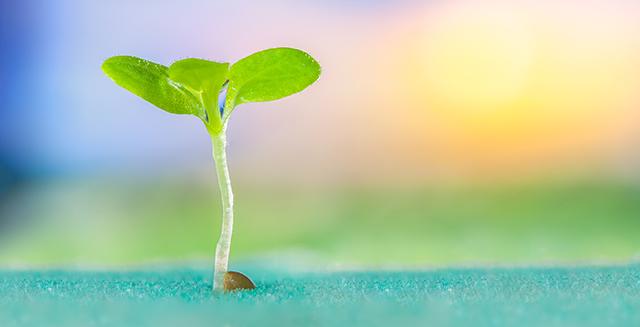 coltivazione-idroponica-vantaggi-nutrizione-controllata