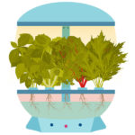 coltivazione-idroponica-in-kit-di-design