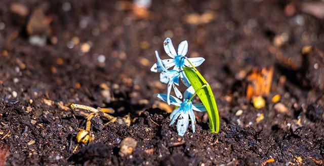 giardinaggio-fai-da-te-colletto-pianta