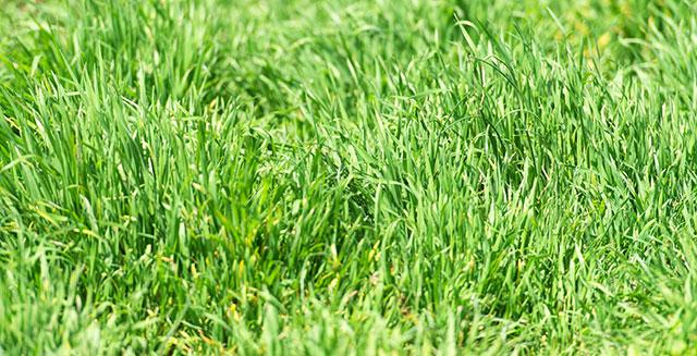 giardinaggio-fai-da-te-esposizione-solare-manto-erboso-macroclima-microclima