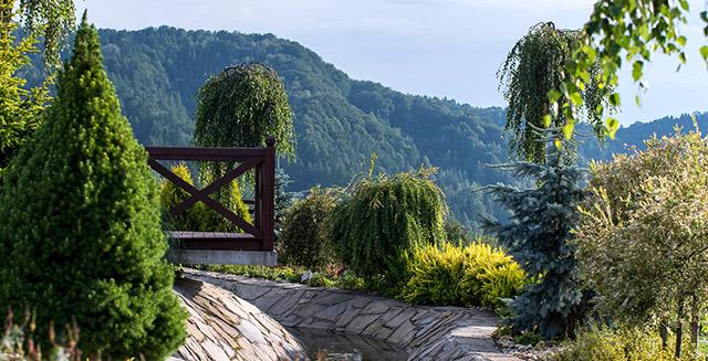 giardinaggio-fai-da-te-portamento-pianta