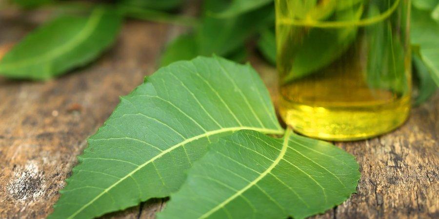 olio di nim rimedi naturali per elimnare cimici