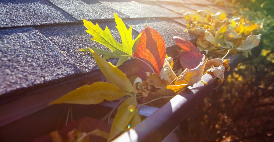 grondaie piene di foglie