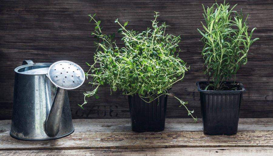 innaffiare le piante in vaso