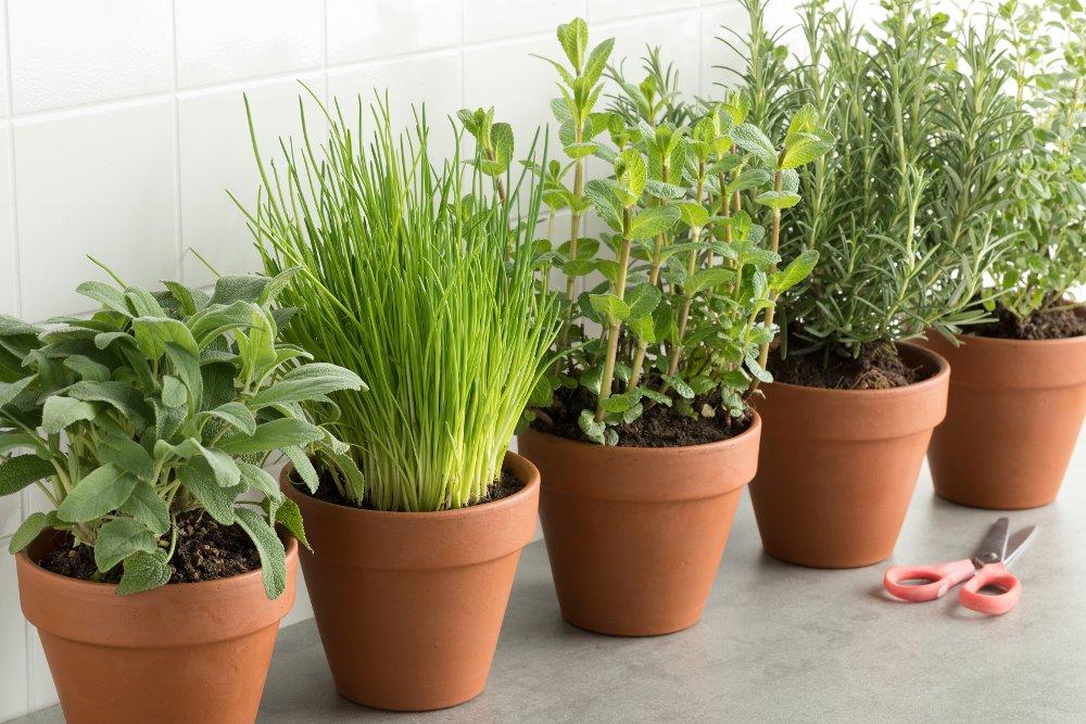 7 consigli per coltivare le erbe aromatiche in vaso for Erbe aromatiche in vaso