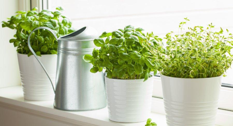 posizionare le erbe aromatiche in vaso