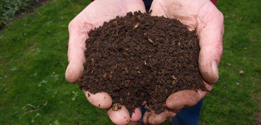 fertilizza le piante in vaso