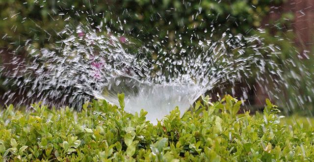 annaffiare-irrigazione-automatica