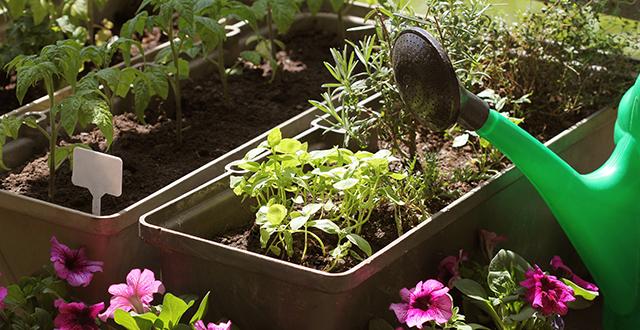 annaffiare-raggruppare-piante