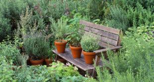 coltivare-erbe-aromatiche