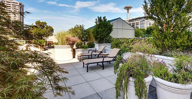 piante-progettare-una-terrazza