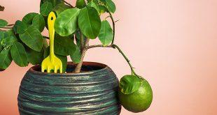alberi-da-frutto-in-vaso